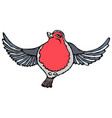 cute adorable red robin bird isolated on a white vector image vector image