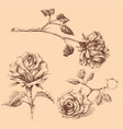 hand drawn roses set isolated vector image