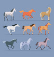 horses breeds domestic strong racing animals vector image