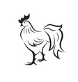 rooster or cock on white background animal farm vector image