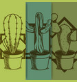 cactus on pot hand drawing vector image