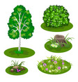 garden landscape set for summer forest or garden vector image vector image