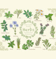 herbs 1 vector image
