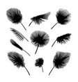palm leaves set exotic palm leaf silhouette vector image vector image