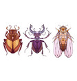 insect set in color with a tribal pattern doodle vector image vector image