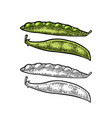 peas pods - close and open black vintage vector image vector image