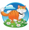 Orange fat cat on the color background vector image
