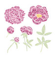 decorative peony set vector image vector image