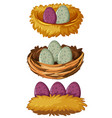 different types of nests and eggs vector image vector image
