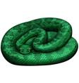 green rattlesnake on white background vector image