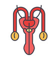 male sexual organs concept line icon vector image