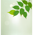 Nature background with green leaves vector image vector image