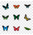 realistic morpho hecuba demophoon common blue vector image vector image