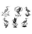 Stork heron crane and egret birds vector image vector image