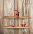 Wood shelf with red flower plant in clay pot vector image