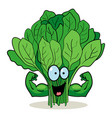 cartoon spinach vector image vector image