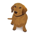 Dachshund realistic of a dog vector image