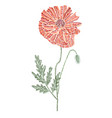 decorative red poppy vector image vector image
