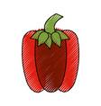fresh pepper vegetable vector image