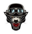pantera head in biker helmet design element vector image vector image