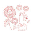 set of sunflowers line drawing autumn isolated vector image