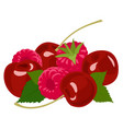 berries raspberry and cherry on white vector image vector image