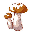 brown cap boletus icon autumn forest mushroom vector image vector image