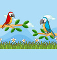 scene with two parrots in garden vector image
