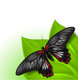summer background with butterfly vector image