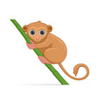 tarsier standing on a white background vector image vector image