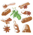cinnamon sticks set vector image