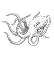 octopus ink hand drawn vintage vector image