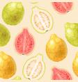 seamless guava fruits vector image vector image