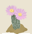 cactus with pink flowers on the light background vector image vector image