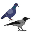 crow and pigeon vector image