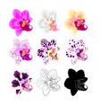 orchid phalaenopsis various colours natural vector image