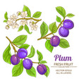 plum branches set vector image vector image