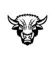 bison or american buffalo head front view sports vector image vector image