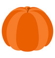isolated thanksgiving pumpkin vector image