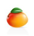 realistic mango vector image