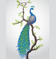 beautiful a national bird peacock