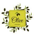 frame with ripe olive branches on white background vector image