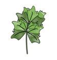 fresh parsley herb vector image