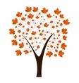 Autumn maple tree vector image