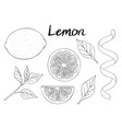 collection of hand drawn elements lemon leaves vector image vector image