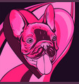 cute puppy pug with heart vector image vector image