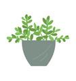 flower in vase flower in pot ecological decor vector image vector image