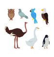 owl dove blue parrot eagle ostrich goose penguin vector image vector image