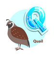 q letter with quail bird for alphabet learning vector image vector image