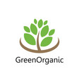 green tree organic logo vector image